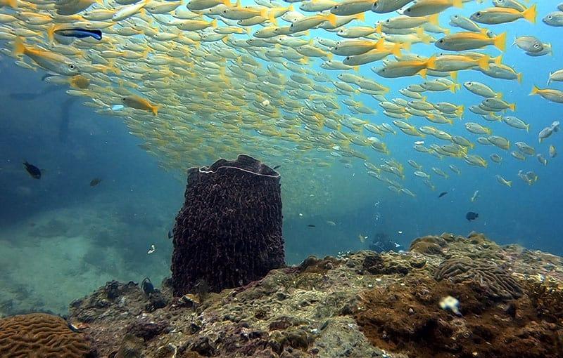 Koh Bida Nok - Barrel Sponge
