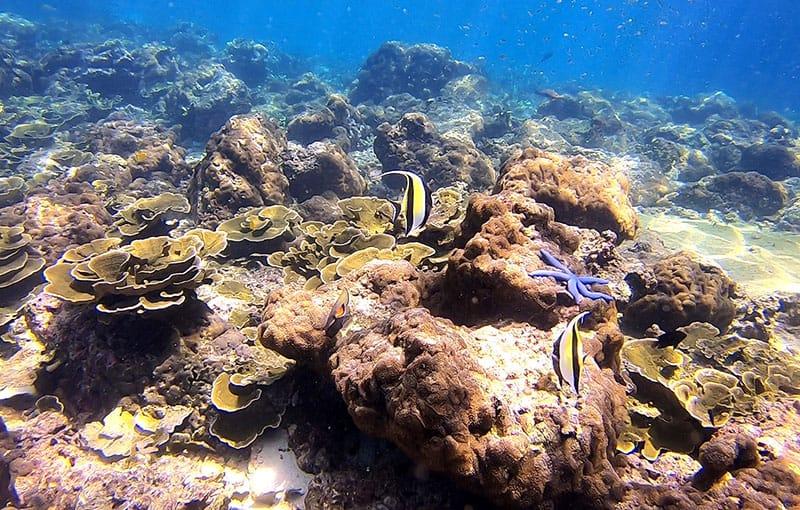 Koh Bida Nok - Hard Corals