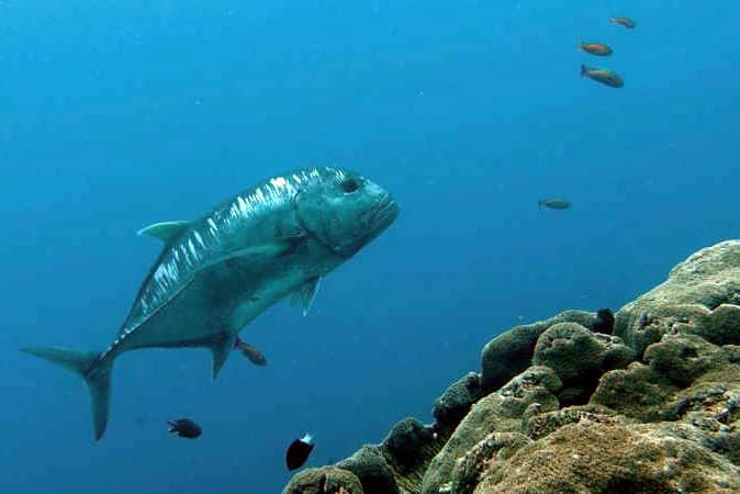 Similan Islands Diving Elephant Head Rock MV Giamani