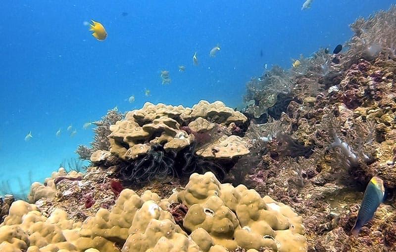 Hin Bida - Healthy Reef