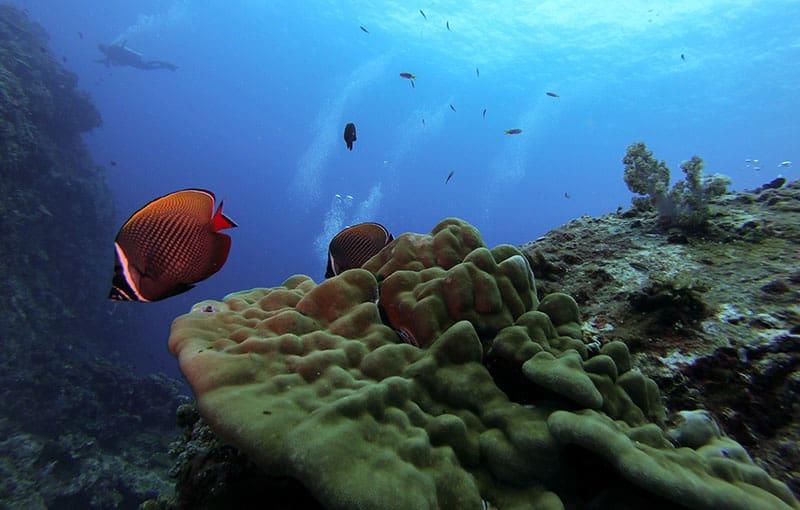 Hin Daeng Reef Fish