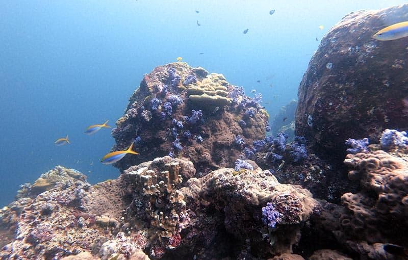 Hin Daeng Reef