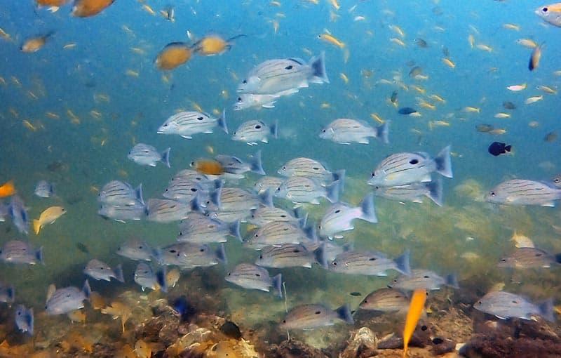 Phi Phi Island Diving MV Giamani