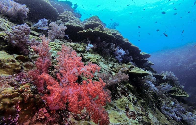 Best Thailand Dive Sites Mv Giamani