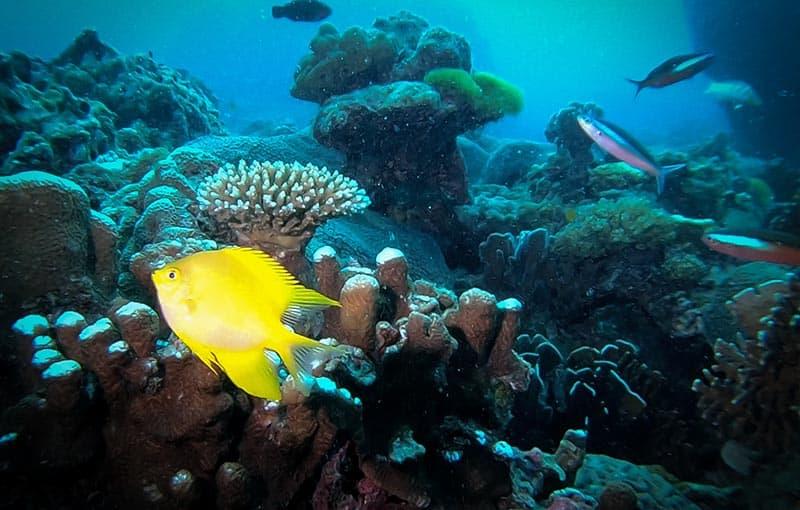 Phuket Diving Racha Yai MV Giamani