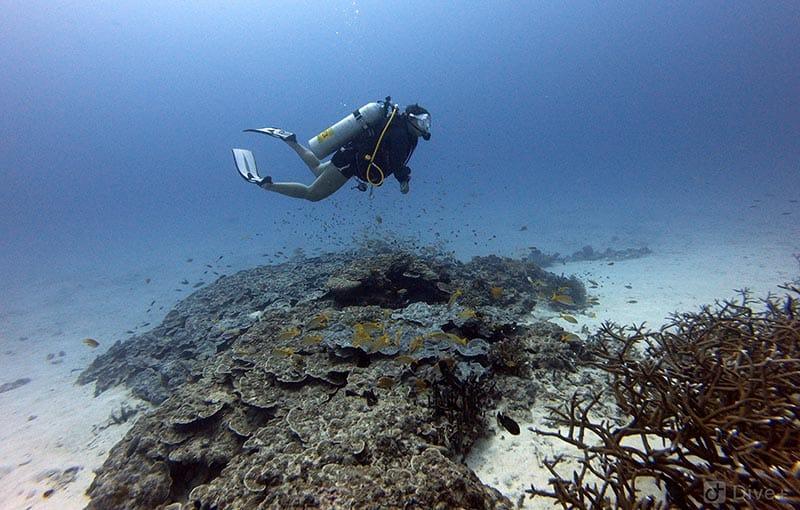 Honeymoon Bay - Clear Water