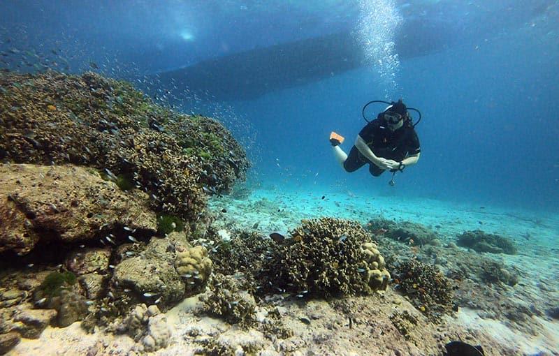 Honeymoon Bay - Coral Bommie