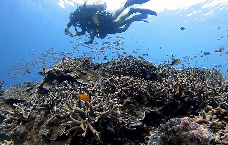 Honeymoon Bay - Healthy Corals