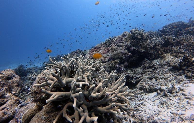 Honeymoon Bay - Healthy Reef