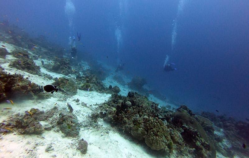 Honeymoon Bay - Reef