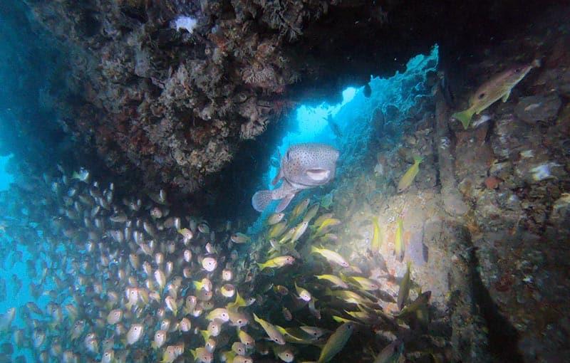 MV Giamani Wreck Diving Thailand