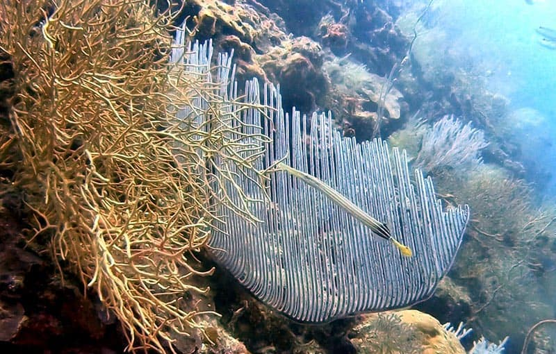 Koh Bida Nai - Reef