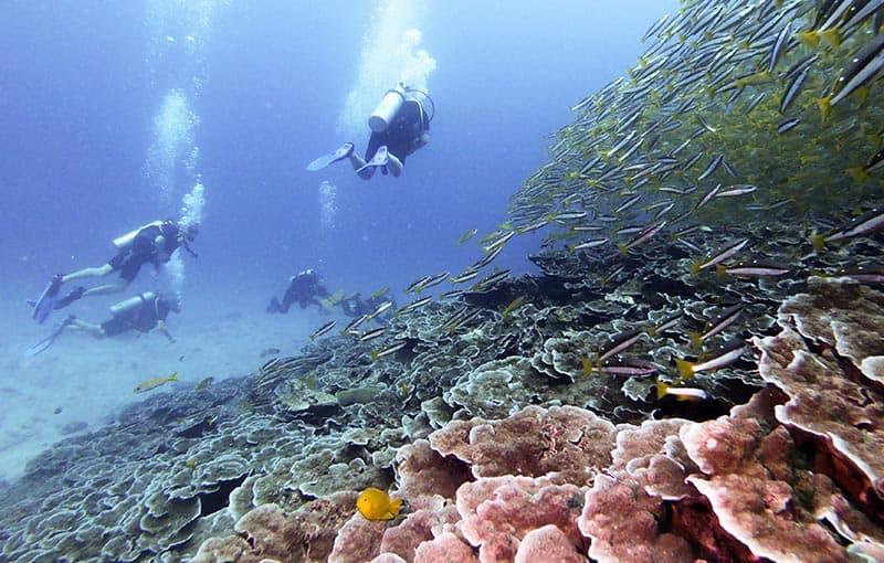 Koh Haa Neua - Healthy Reef