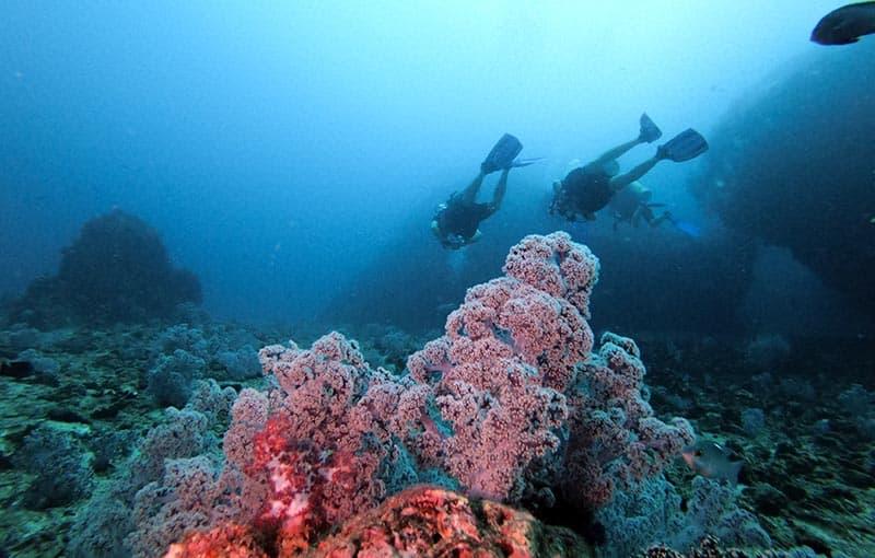Koh Haa Neua - Soft Coral