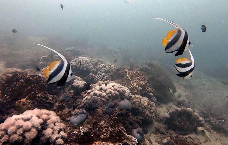 Pileh Wall - Reef
