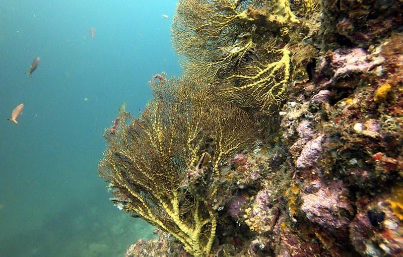 Pileh Wall - Yellow Coral