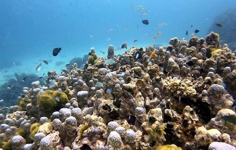 Racha Noi Banana Bay - Hard Coral