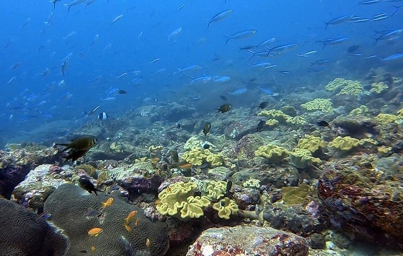 Racha Noi North Bay