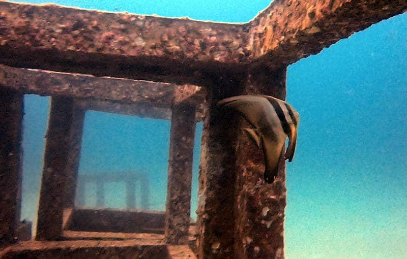 Racha Yai Bay 1 - Batfish