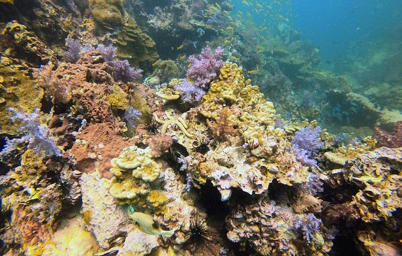 Shark Point - Healthy Reef