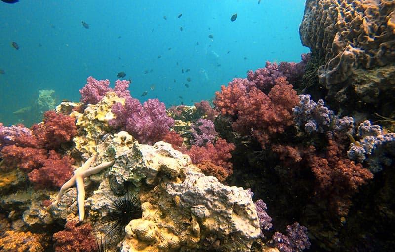 Shark Point - Pristine Corals