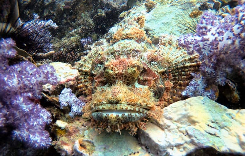 Shark Point - Scorpionfish