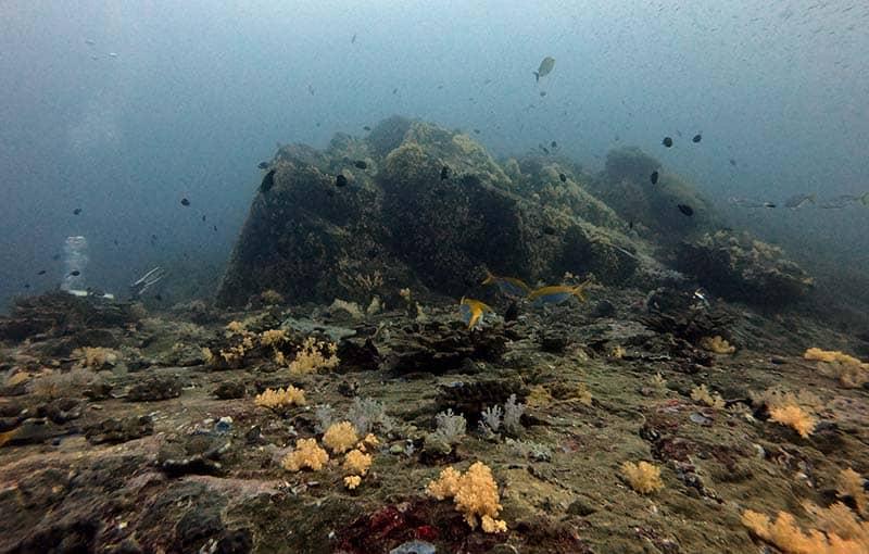 Koh Bon Pinnacle - Diving Similan Islands - MV Giamani