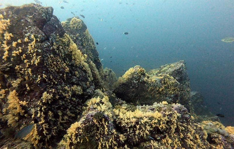 Koh Bon Pinnacle Hin Luang - Diving Thailand Liveaboard