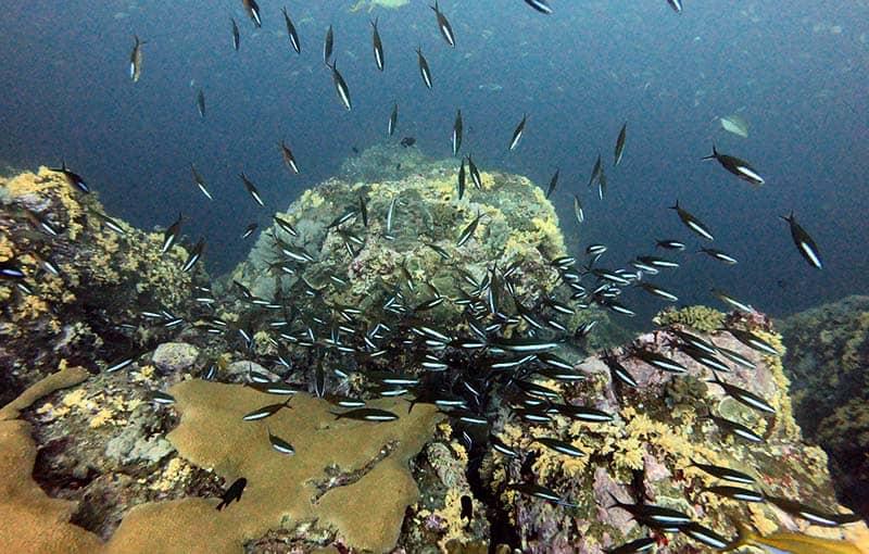 Koh Bon Pinnacle - Thailand Diving Liveaboard