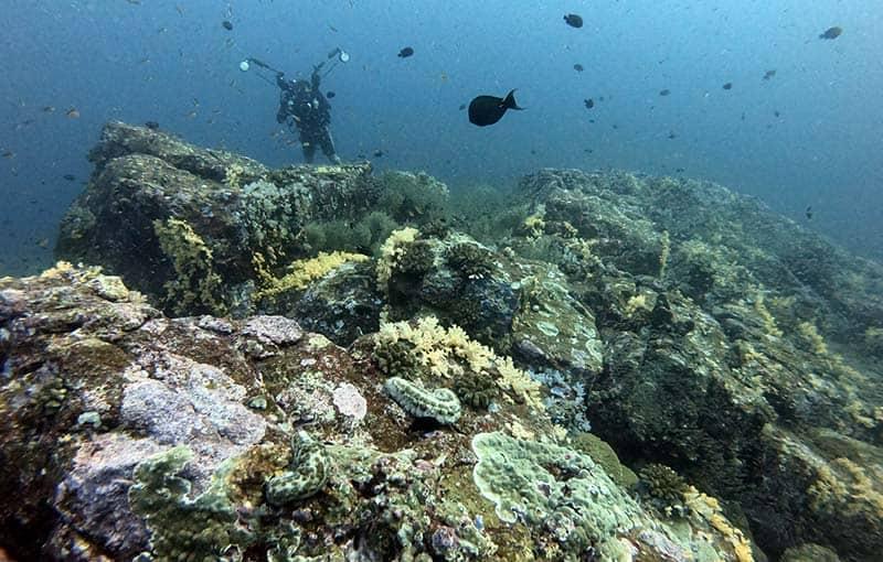 Koh Bon Pinnacle - Thailand Diving MV Giamani Liveaboard