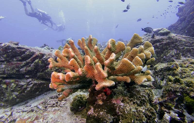 Koh Bon Ridge - Hard Coral