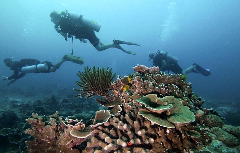 Koh Tachai Reef