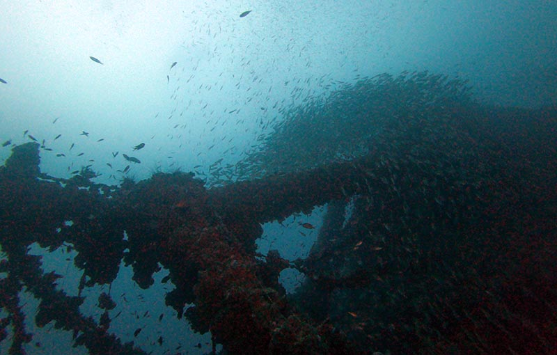 MV Sea Chart Wreck - Tons of fish.JPG