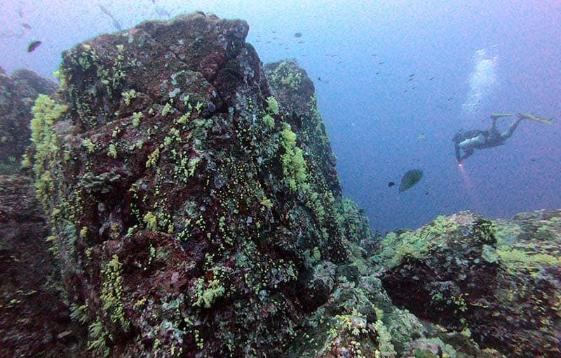 Thailand Liveaboard Diving Koh Bon Pinnacle